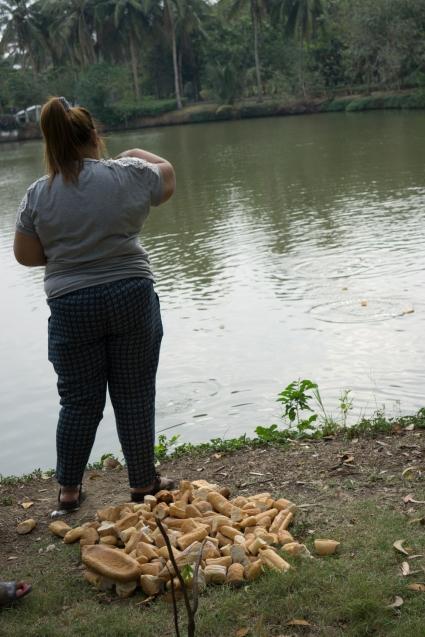 ระหว่างทาง.. พบผู้คนใจดี นำขนมปังจำนวนมาก มาเลี้ยงปลา..