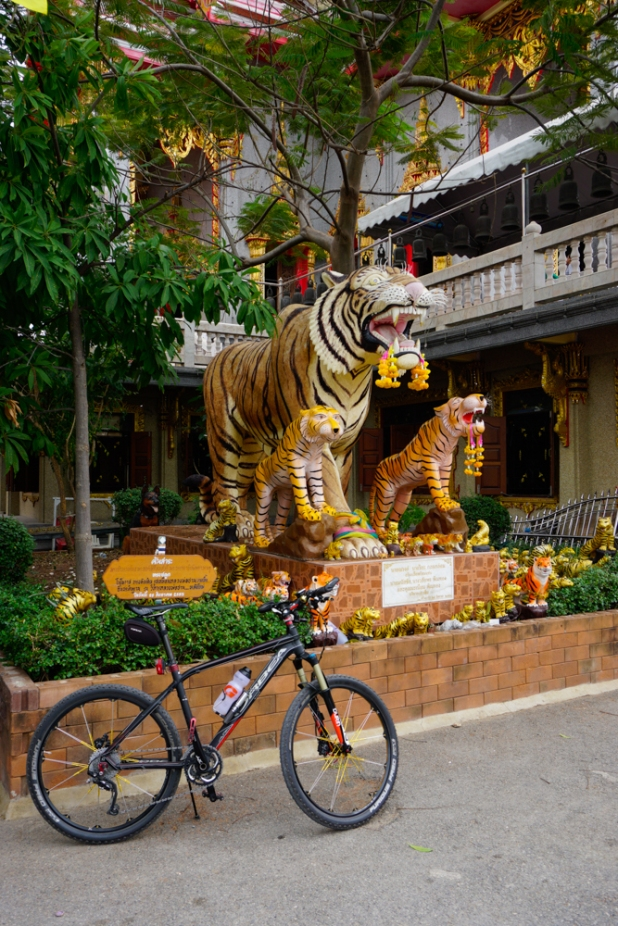 trip-ride-tiger-see-tiger-13